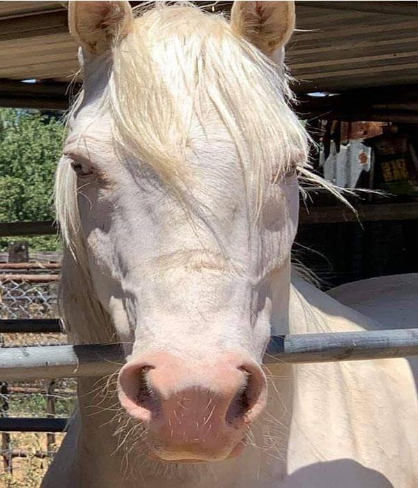 horse rescue near me
