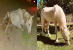 Horse-rescue, Horse rescue