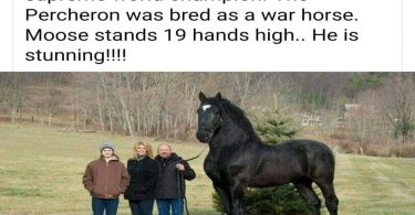 the top 10 biggest horses in the world